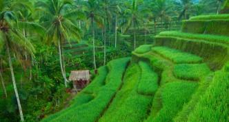 5 tips voor een vakantie Bali