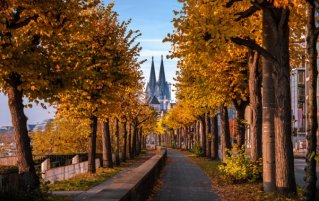 Keulen - Dom in de herfst