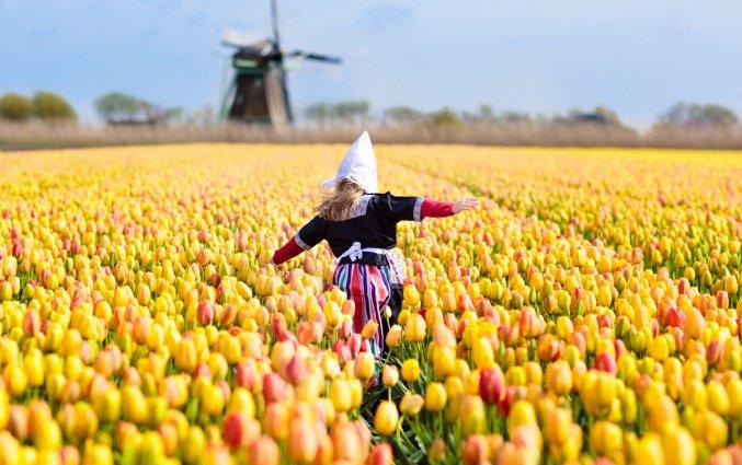 Nederland - Tulpenveld